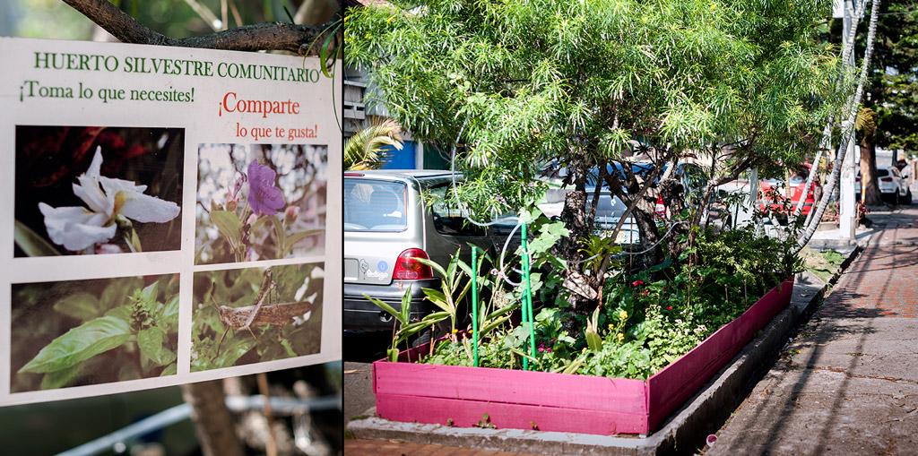 Bacanika huertas urbanas 02 - Huertas públicas en las comunas de Medellín.