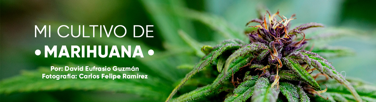 Marihuana_Slide