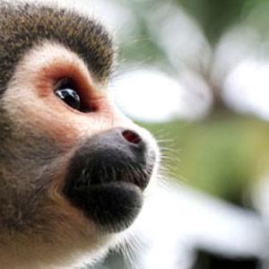 Guía Bacánika del Amazonas