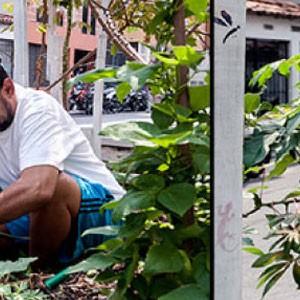 Huertas públicas en las comunas de Medellín